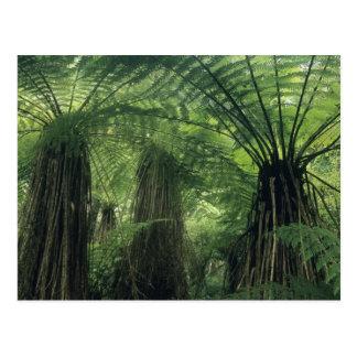 New Zealand, Haast Valley, Westland, Soft Tree Postcard