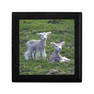 New Zealand Lambs Trinket Boxes