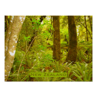 New Zealand Rain Forest Poster