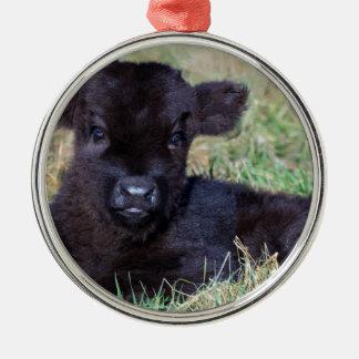 Newborn black scottish highlander calf lying metal ornament
