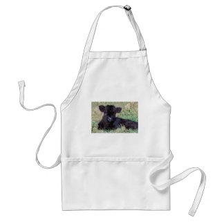 Newborn black scottish highlander calf lying standard apron
