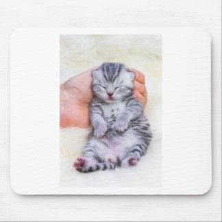 Newborn cat lying sleepy in hand on fur mouse pad