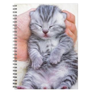 Newborn cat lying sleepy in hand on fur notebooks