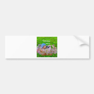 Newborn in a basket bumper sticker