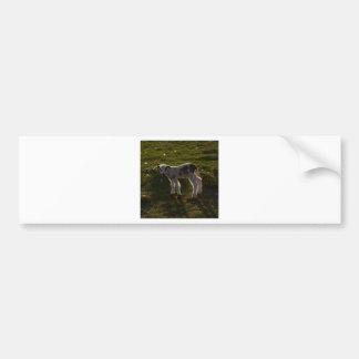 Newborn lamb bumper sticker