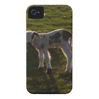Newborn lamb iPhone 4 case