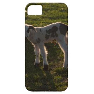Newborn lamb iPhone 5 cover