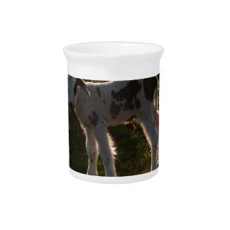 Newborn lamb pitcher