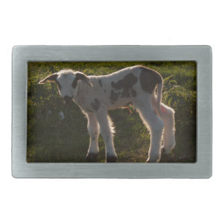 Newborn lamb rectangular belt buckle