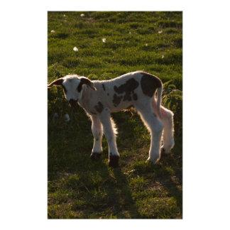 Newborn lamb stationery