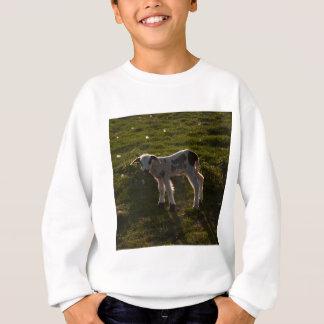 Newborn lamb sweatshirt
