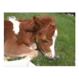 Newborn Pony - Spirit Postcard