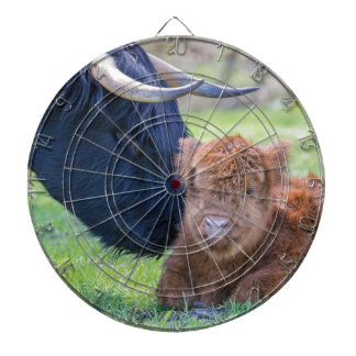 Newborn scottish highlander calf with mother cow dartboard with darts