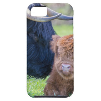 Newborn scottish highlander calf with mother cow iPhone 5 cases