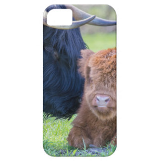 Newborn scottish highlander calf with mother cow iPhone 5 covers