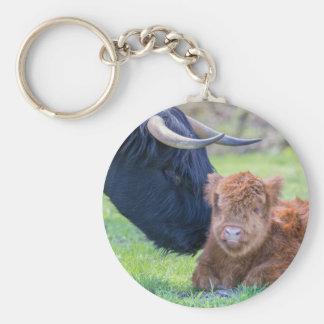Newborn scottish highlander calf with mother cow key ring