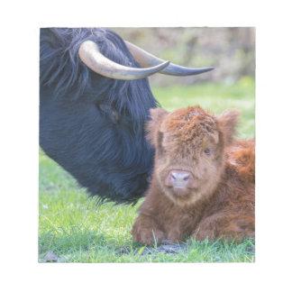 Newborn scottish highlander calf with mother cow notepads