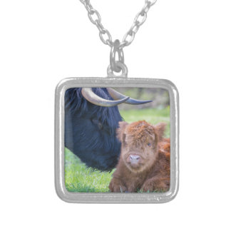 Newborn scottish highlander calf with mother cow silver plated necklace