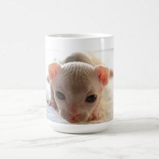 Newborn sphinx kitten coffee mug