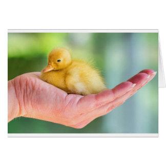 Newborn yellow duckling sitting on hand card