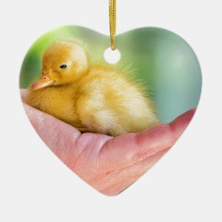 Newborn yellow duckling sitting on hand ceramic heart decoration