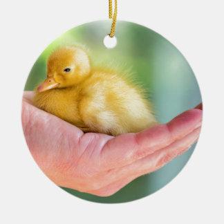 Newborn yellow duckling sitting on hand ceramic ornament
