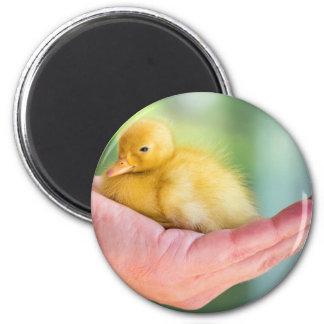Newborn yellow duckling sitting on hand magnet