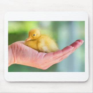 Newborn yellow duckling sitting on hand mouse pad