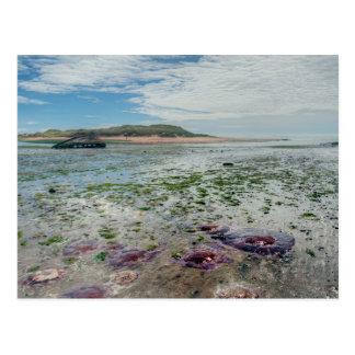 Newburgh Seal Beach Postcard