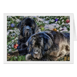 Newfie Holiday Wishes Cards