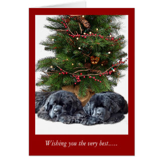 Newfies & the Christmas Cat Greeting Card