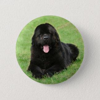 Newfoundland dog 6 cm round badge
