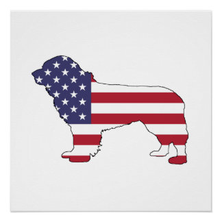 "Newfoundland Dog - ""American Flag"" Poster"