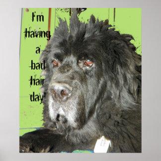 Newfoundland Dog Bad Hair Day poster