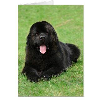 Newfoundland dog card