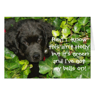 Newfoundland Dog Christmas Greeting Card