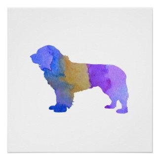 Newfoundland Dog Poster