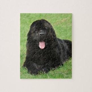 Newfoundland dog puzzle