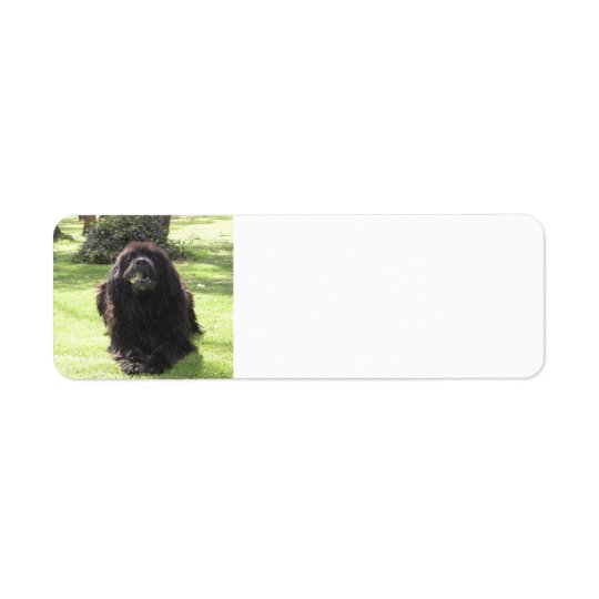 Newfoundland laying.png return address label