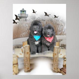 Newfoundland Puppies on beach Poster