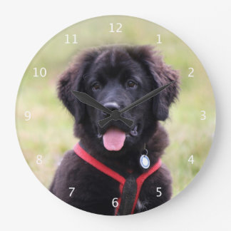 Newfoundland puppy dog cute beautiful photo large clock