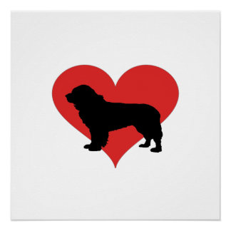 Newfoundland With A Big Red Heart