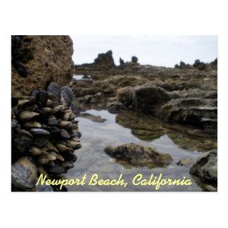 Newport Beach Muscles Postcard