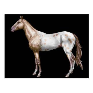 Nez Perce Horse Postcard