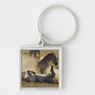 Ngorongoro Crater, Tanzania, Common Zebra, Equus Keychains