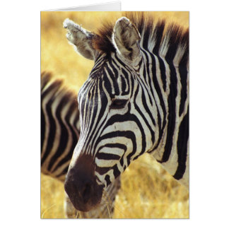 Ngorongoro Zebra Card