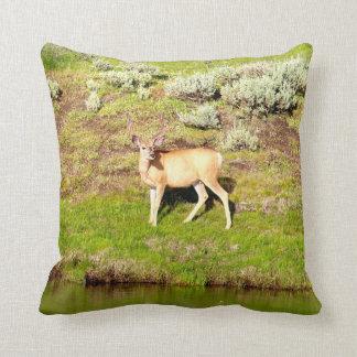Nice Buck Deer in Velvet Photo Cushion