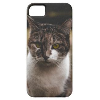 Nice cat marries iPhone 5 case