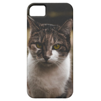 Nice cat marries iPhone 5 cover