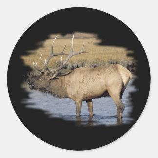 Nice Elk in the stream Round Sticker